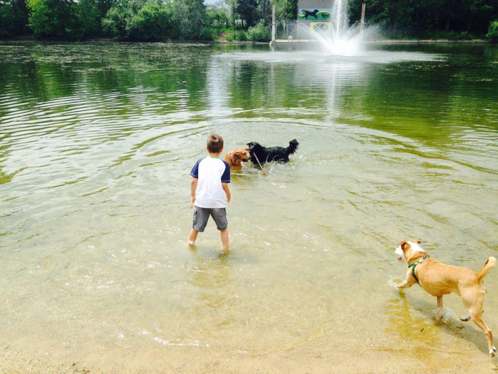 Whitesands Dog Park Boy and Pups